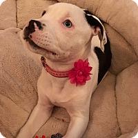Adopt A Pet :: Ella~Pending Adoption~ - Columbus, OH