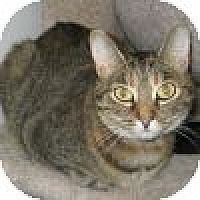 Adopt A Pet :: Alice - Powell, OH