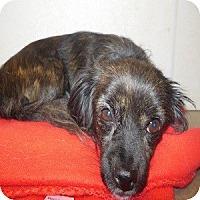 Adopt A Pet :: Tallulah - Phoenix, AZ
