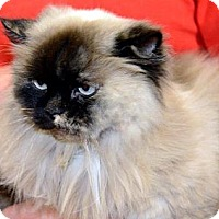 Adopt A Pet :: Marlena - Harrisburg, NC