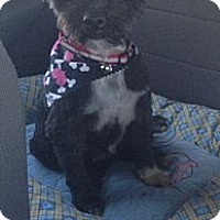 Adopt A Pet :: Maisy - Oceanside, CA