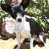 Adopt A Pet :: Larkspur - Gilbert, AZ