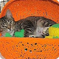 Adopt A Pet :: Ponder - Victor, NY