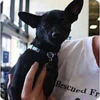 Adopt A Pet :: Chico - Arlington, TX