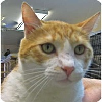 Adopt A Pet :: Wellington - Deerfield Beach, FL