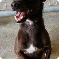 Adopt A Pet :: Rhett - Gainesville, FL