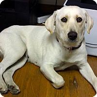 Adopt A Pet :: *Buttercup - PENDING - Westport, CT