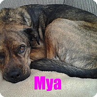 Adopt A Pet :: Mya - Adopted - August 2015 - Huntsville, ON