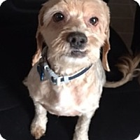 Adopt A Pet :: Elvis - Sacramento, CA
