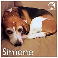 Adopt A Pet :: Simone - Pittsburgh, PA