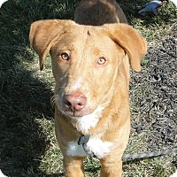 Adopt A Pet :: Beau - Lewisville, IN