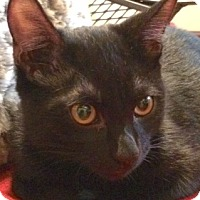 Adopt A Pet :: Blackie and Smokey - Longview, WA