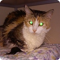 Adopt A Pet :: Patches - Franklin, NH
