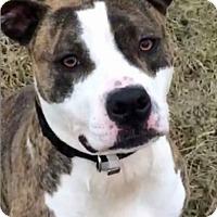 Adopt A Pet :: Luscious - Troy, MI