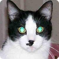 Adopt A Pet :: Bandit - Duluth, GA
