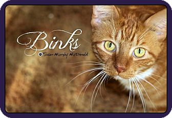 Domestic Shorthair Cat for adoption in Cumbeland, Maryland - Binks