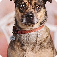 Adopt A Pet :: Balthazar - Portland, OR
