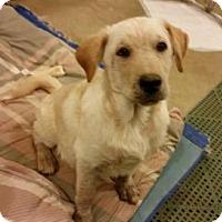 Adopt A Pet :: Thunder - Crocker, MO