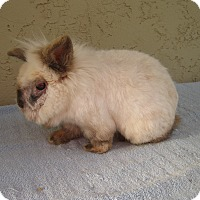 Adopt A Pet :: Amos ( A Mess) - Bonita, CA