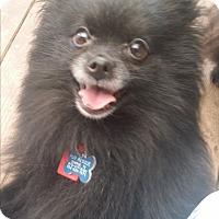 Adopt A Pet :: Egypt - conroe, TX