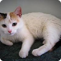 Adopt A Pet :: Marlow - Richmond Hill, ON