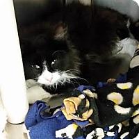 Adopt A Pet :: Damon - Chippewa Falls, WI