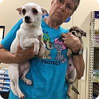 Adopt A Pet :: Callagan - Hohenwald, TN