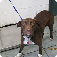 Adopt A Pet :: Coco - Weatherford, TX