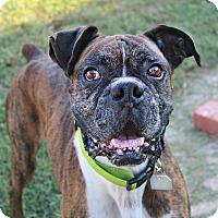 Adopt A Pet :: Murdock - Shreveport, LA