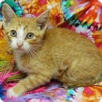 Adopt A Pet :: William - Columbus, NE