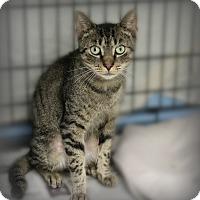 Adopt A Pet :: Austin - Glen Mills, PA