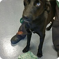 Adopt A Pet :: Butch - available 9/18 - Sparta, NJ