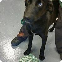 Adopt A Pet :: Butch - Sparta, NJ