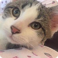 Adopt A Pet :: Walter - Wichita, KS