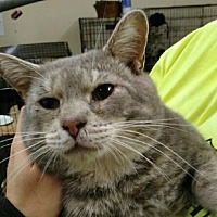 Adopt A Pet :: Sam - East McKeesport, PA