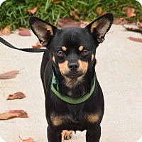 Adopt A Pet :: Sonny - Meridian, ID