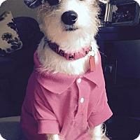Adopt A Pet :: Gabby - PENDING - Sharon Center, OH