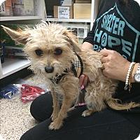 Adopt A Pet :: Fifi - Thousand Oaks, CA