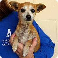 Adopt A Pet :: Butter - Santa Maria, CA