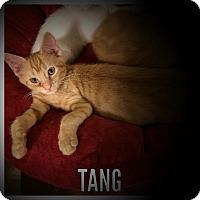 Adopt A Pet :: Tang - Whitehall, PA