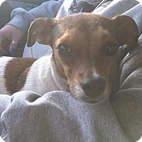 Adopt A Pet :: Daisy - Macomb, IL
