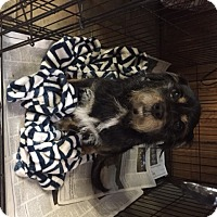 Adopt A Pet :: Bubbie - Jacksonville, FL