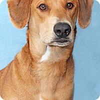 Adopt A Pet :: Nunchuck - Encinitas, CA