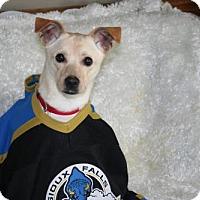 Adopt A Pet :: Archie - Sioux Falls, SD