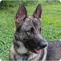 Adopt A Pet :: Gehrig - Conyers, GA