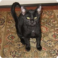 Adopt A Pet :: McGee - Harriman, NY, NY