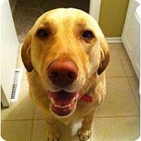 Adopt A Pet :: Miika - Rigaud, QC