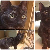 Adopt A Pet :: Shelby - Modesto, CA