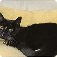 Adopt A Pet :: Emma (MP) - Little Falls, NJ