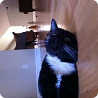 Adopt A Pet :: Seamus - Columbia, SC